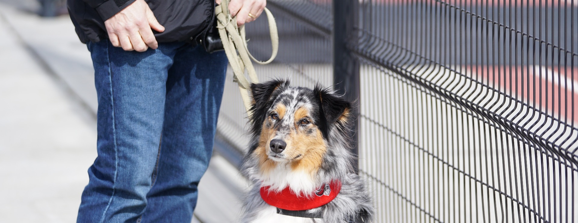 Keeping Canines Out Of The Cold: Electric Panel Heaters For Kennels